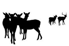 Deer  herd vector stock photography
