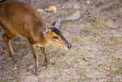 Deer high quality Stock Image