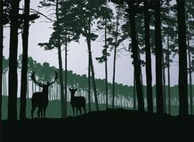 Deer and hind in a coniferous green forest under a gray sky. Vector Royalty Free Stock Photo