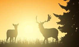Deer and hind in a meadow with a tree, with the rising sun behin Stock Photography