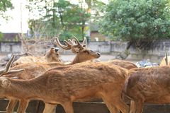 Deer. Hordes of deer family planted animals Royalty Free Stock Photos