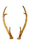 Deer horns isolated on the white background. Used color tool for soft tone Stock Image