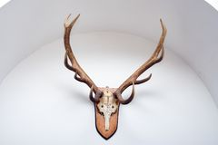 Deer horns on wall. A hunting trophy, deer horns hanging on a white wall, in an arch recess stock photography
