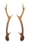 Deer horns. On white background stock photo