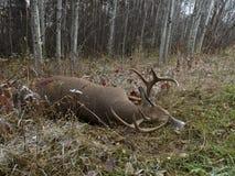 Deer Hunting in Minnesota Royalty Free Stock Photo