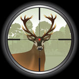 Deer hunting Stock Photography