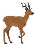 Deer, illustration. Brown Male Deer or Buck, vector illustration vector illustration