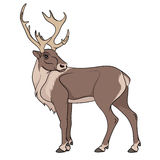 Deer illustration. Isolated objects on white. EPS10 Royalty Free Stock Photo