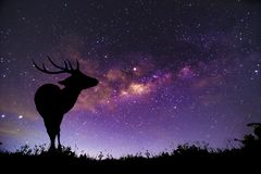 The deer image stands in the Milky Way constellation stock images