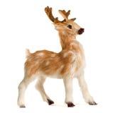 deer isolated white Arkivbilder