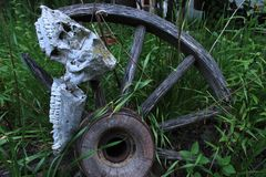Deer Jawbone on an Old Wheel. A deer jawbone hanging on an old wheel spoke in the grass Stock Photography