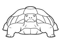 Turtle. Turtle illustrator desain .eps 10 Stock Image