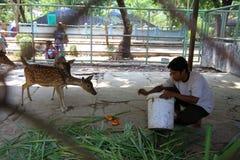 Deer in Jurug zoo Royalty Free Stock Photography