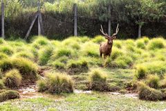 Deer Knight. Deer life, fully the nature on my place is green Stock Photo