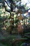 Deer. Kyoto japan nara lantern stone park travel Stock Photography