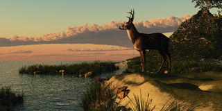 Deer Lake. A beautiful buck with his antlers makes a striking figure overlooking a lake Stock Photography