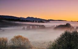 Deer Lake Park and morning fog Stock Images