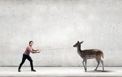 Deer on lead Royalty Free Stock Images