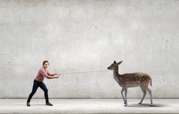 Deer on lead Stock Image