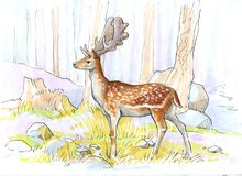 A deer in a light forest. Sketch Stock Image