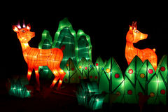 Deer light show Royalty Free Stock Photos