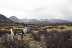 Deer Looking Over At The Beautiful Nature Scenic Concept Stock Image