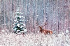 Deer male with big horns and lonely spruce tree in the winter snowy forest. Winter artistic image stock photo