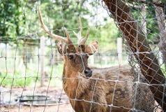 Deer male stock photo