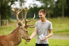 Deer with man Royalty Free Stock Image