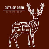 Deer meat cuts in color Stock Photos