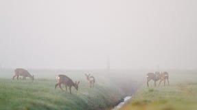 Deer in mist Royalty Free Stock Photo