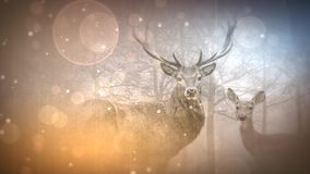 Deer in the Mist with Particles 4K Loop. Features a camera panning across two deer that fade in by ink reveal with particles floating across the screen in a stock illustration