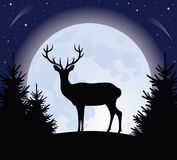Deer and the moon. Royalty Free Stock Photography