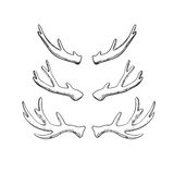 Deer and moose horns. Set of hand drawn deer and moose horns isolated on white. Vector natural sketch Stock Image