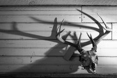 Deer mount Royalty Free Stock Photos