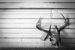 Deer mount Stock Image