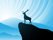 Deer on mountain Royalty Free Stock Images