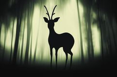 Deer in mysterious forest illustration Stock Photos