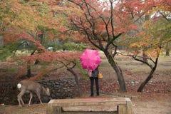 Deer Of Nara Park Stock Photography