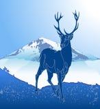 Deer in nature Stock Photos