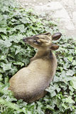 Deer in nature royalty free stock photos