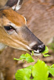 Deer in nature Stock Photo