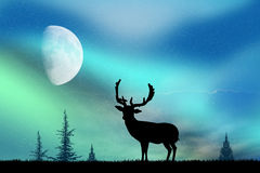 Deer and the Northern Lights Stock Photos