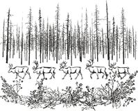 Deer in the northern taiga. Stock Photography