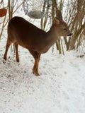 Deer. stock photos
