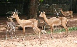 Deer park Royalty Free Stock Image