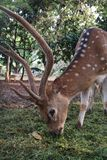 Deer in the park at the Indonesian national monument stock image