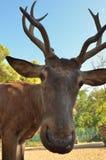 Deer in the park Stock Image