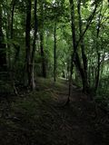 Trail in the woods royalty free stock images