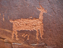 Deer petroglyph. Anasazi petroglyph of deer on sandstone cliff Royalty Free Stock Images